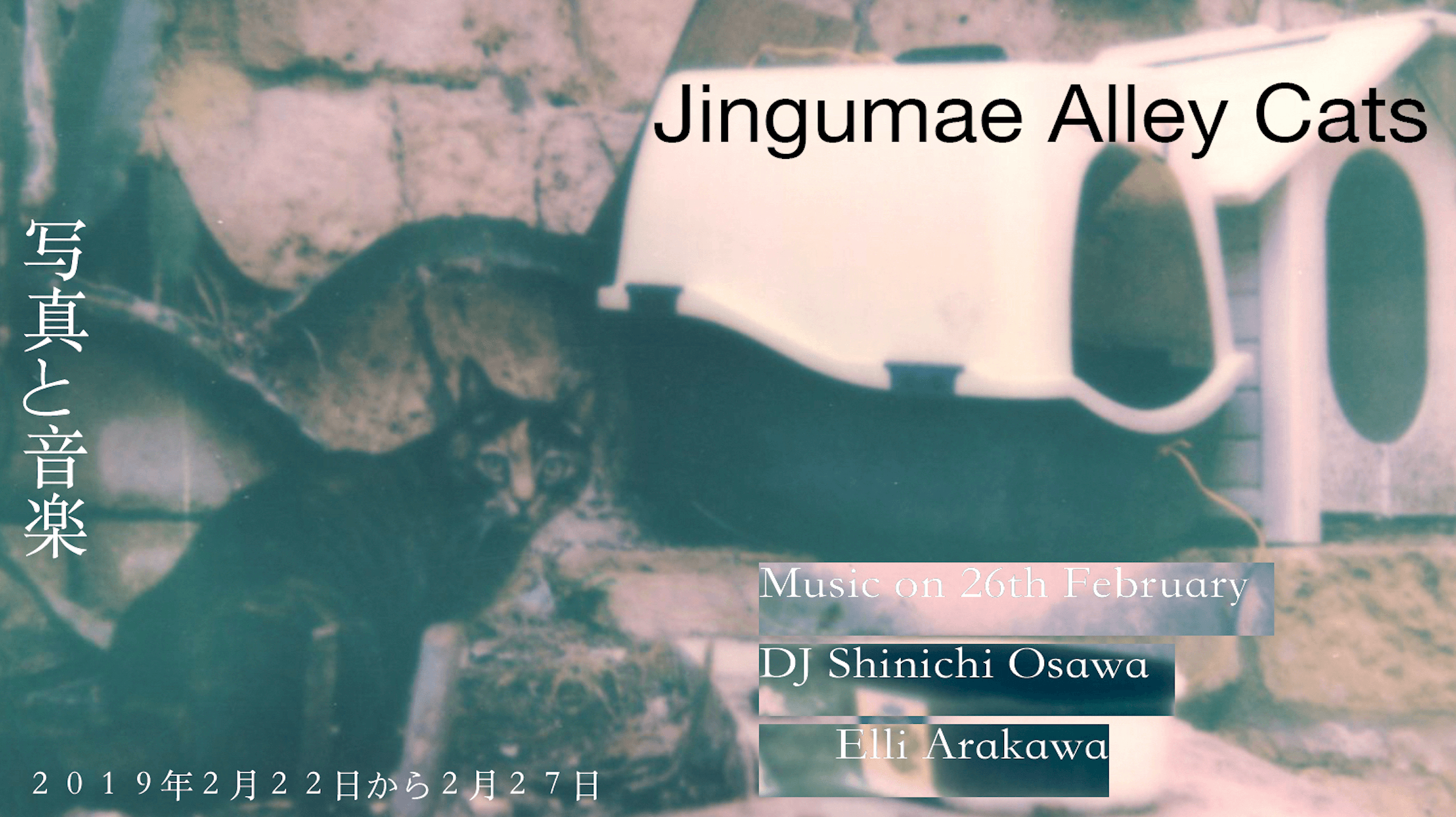 Jingumae Alley Cats - Polaroid Installation